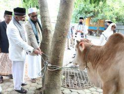 Pemkab Aceh Utara Bantu 18 Lembu Qurban untuk Dayah, Masjid dan Gampong